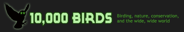 10,000 Birds - Birding, blogging, conservation, and commentary
