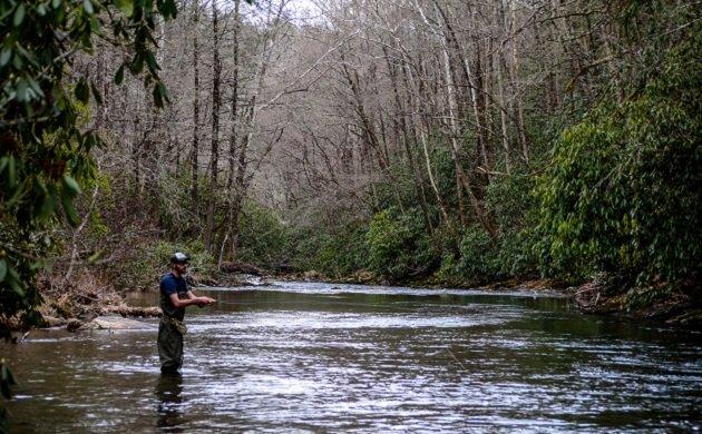 fishing, birding, pisgah, forest, north carolina