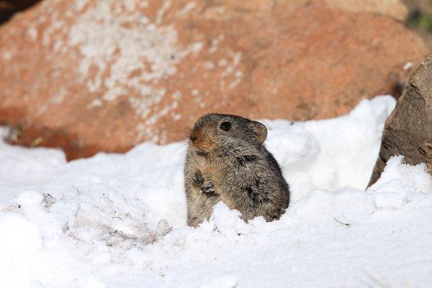 Sloggett's Ice Rat by Adam Riley