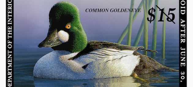 Duck Stamp 2013