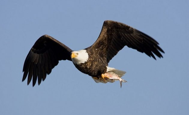 Conservation The Endangered Species Act At 40