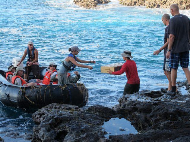 Nihoa Millerbird Translocation to Laysan Island