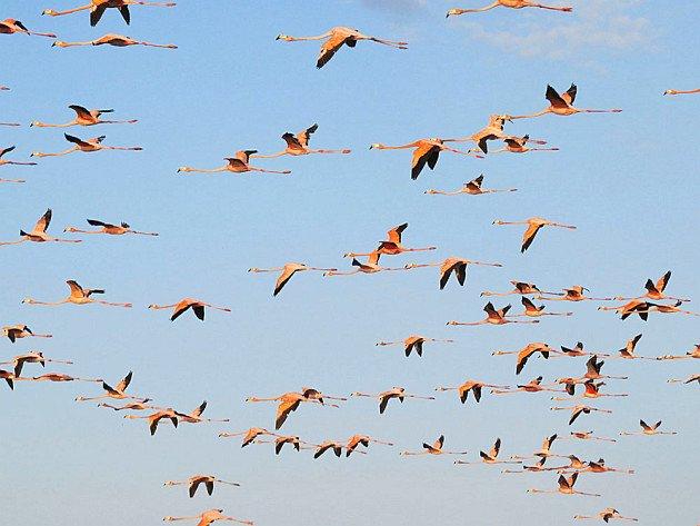 Here's the new bird family tree. It's amazing. - 10,000 Birds