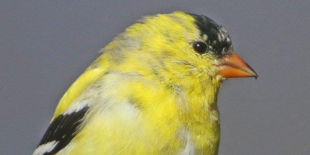 April Birding Across Queens