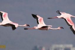 Fantastic Flamingos