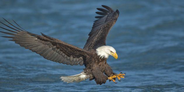 Record-breaking eagles' nests, coastal Georgia, and a wicked sunburn