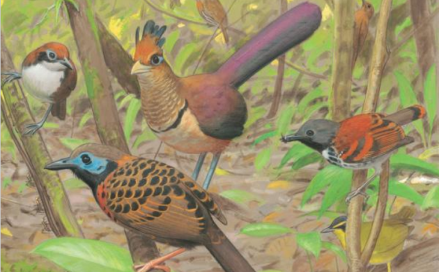 New Field Guide: Central America