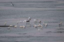 Birding Tiaozini, Jiangsu, China