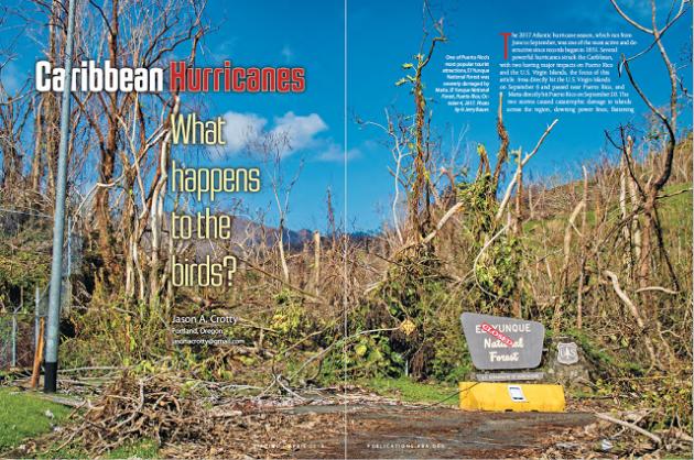 Карибские ураганы: что происходит с птицами (Birding, апрель 2018 г.)