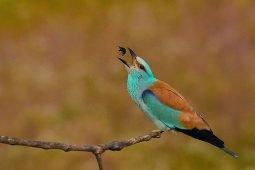 Birding northern Serbia, or a sudden bird tour