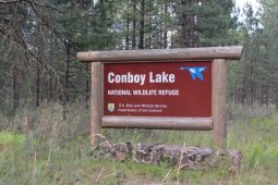 Summer Birding at Conboy Lake NWR