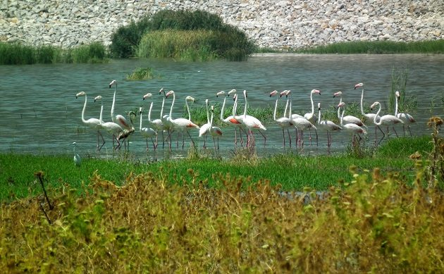 What is killing birds at Karla Lake (Greece)?