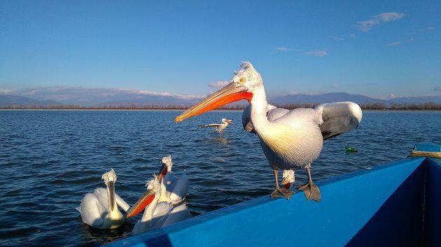 The Lake of Beasts: Kerkini, Greece