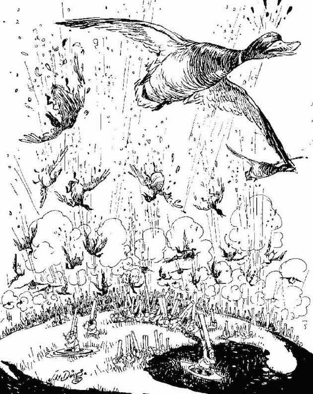 Ding Darling Ducks In Flight