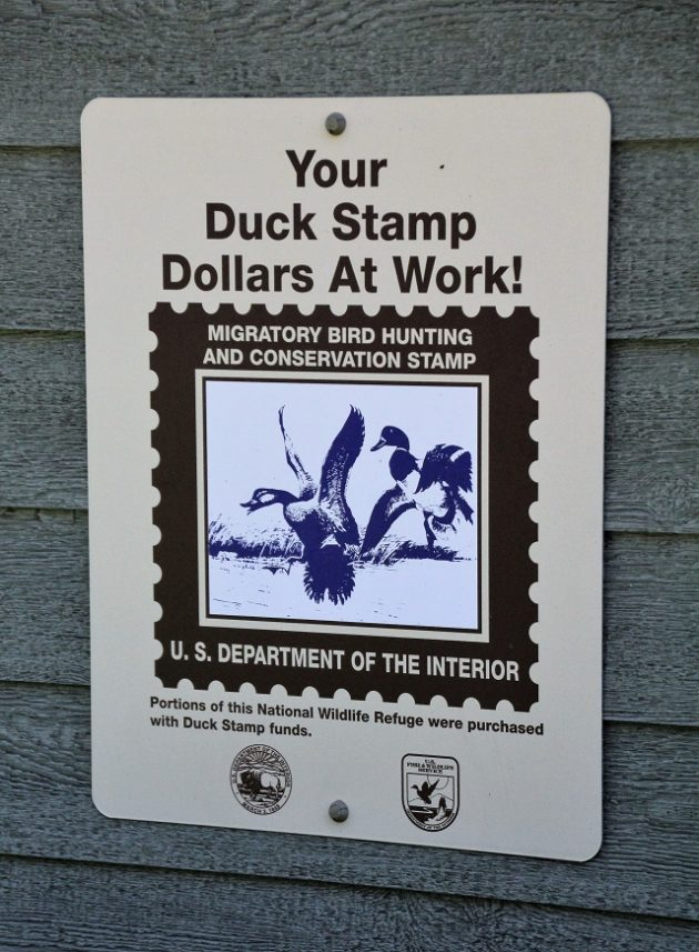 Your Duck Stamp Dollars at Work!