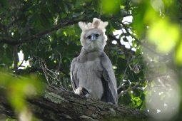 GUYANA–Simply Delicious Birding!