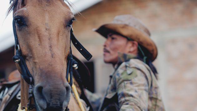 ковбой и лошадь
