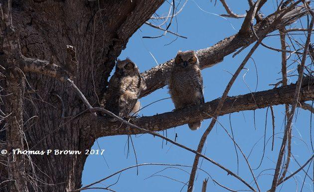 Owls at 70 MPH