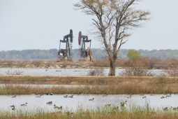 Hagerman NWR: Birding Amidst Oil Wells