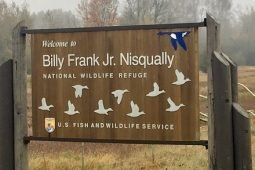 Fall Birding at Nisqually NWR