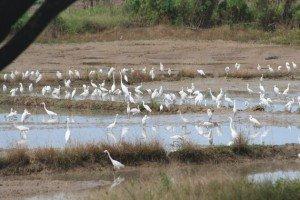 Egrets Kota Kinabalu