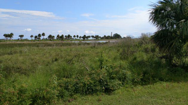 nature, florida