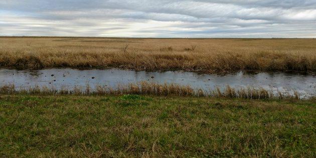 Birding Lacassine National Wildlife Refuge in Louisiana