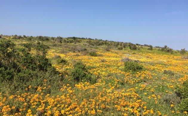 West Coast NP – Blooming Marvelous