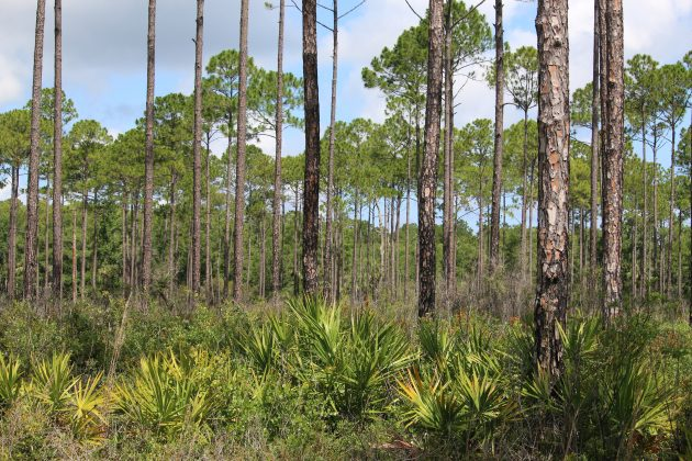 nature, florida, cedar key, suwannee river wildlife refuge
