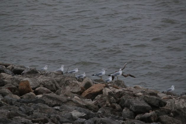 nature, birding, kansas