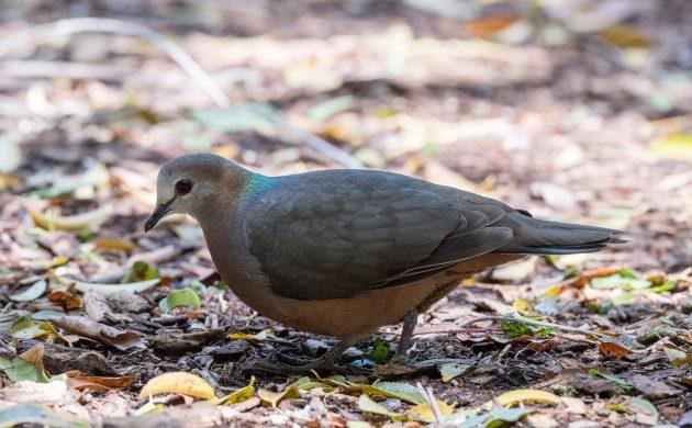 Birding Cape Town