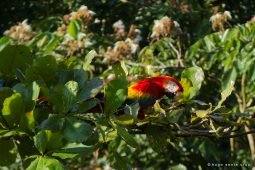 Visit the Macaw Lodge in Costa Rica