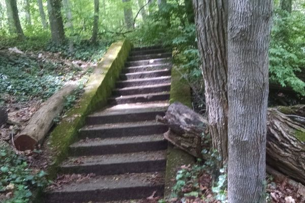 abandoned staircase in the woods at Muttontown Preserve