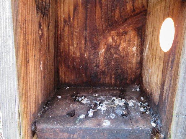 Bird Droppings in Nest Box