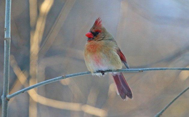 Help Queens Birders Save the Forest Park Feeders!