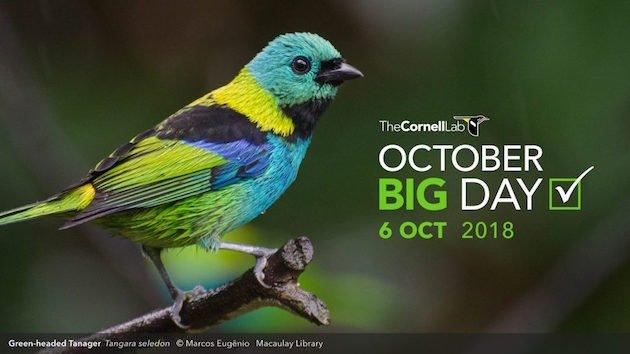 October Big Day 2018
