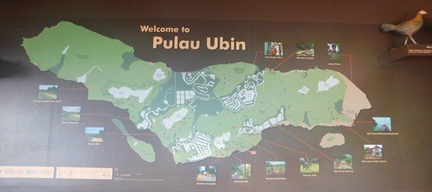 10,000 Birds Birding Pulau Ubin-Singapore - 10,000 Birds