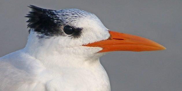 February Birding in Tybee Island, Georgia