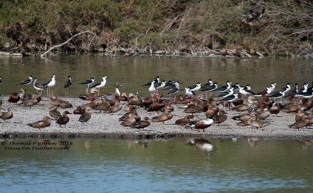 A short timers approach to birding