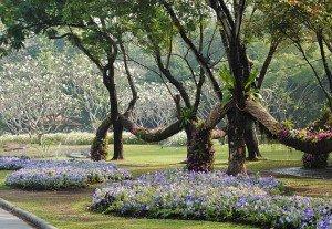Suan Luang Park E