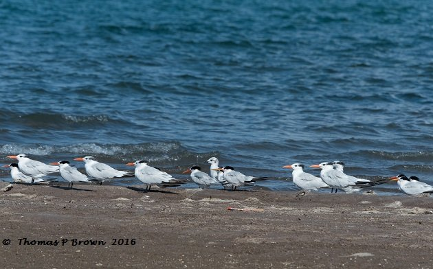 terns-group-shot