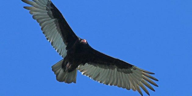 Birding from New York to North Carolina