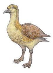 Vegavis reconstruciton, from Dinopedia.