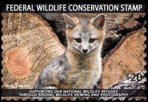 Wildlife Conservation Stamp Fox Kit