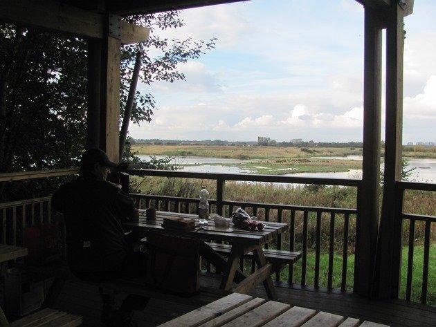 wild-bird-cafe