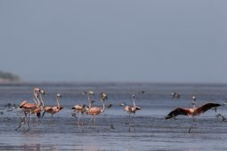 Back to the Forest – but first, Flamingos!