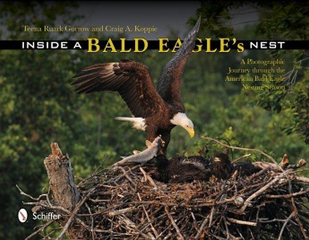 bald eagle cover