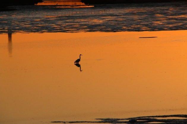 birding, nature, landscape, california