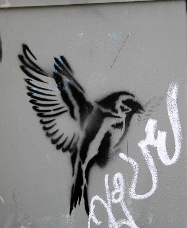 Bird, graffitti, nature, new orleans