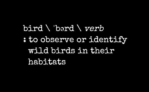 Birding Terms and Dictionary Definitions: Bird
